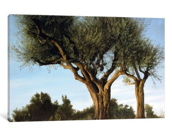 iCanvas Olive Trees Gallery Wrapped Canvas Art Print by Thomas Darnell
