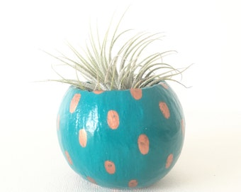 Air Plant Planter with Air Plant - Teal with Copper Spots