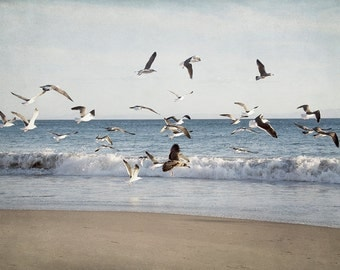 Beach Photography, Ocean Wall Decor, Seagull Picture, Nature Photograph, Coastal Artwork, Blue Wall Art, Cape Cod Art Print