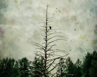 On Sale Eagle's Landing, Field, Trees, Eagle