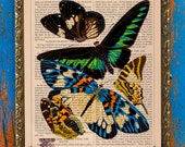 Intricate E.A. Séguy Insect Print (Euploea rhadamanthus) on an Antique Upcycled Bookpage