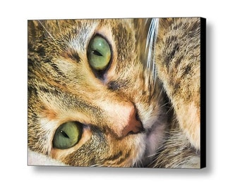 Cat Lover's Gifts Green Eyed Feline Cat Portrait Closeup Fine Art Photography on Giclee Gallery Wrap Canvas
