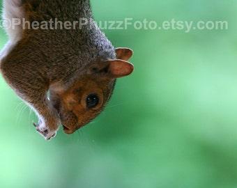 Eastern Gray Squirrel Wildlife Photography Fine Art Nature Print Animal Photo, Pacific Northwest Home Decor Children Nursery Wall Art