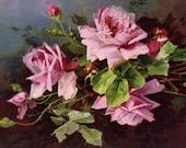 Vintage Klein Art Postcard Beautiful Pink Rose Still Life Printed Art Postcard