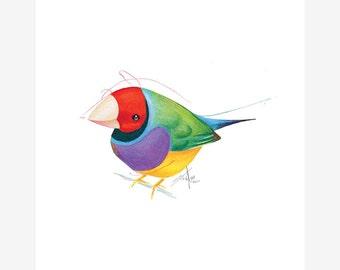 Gouldian Finch Bird Print A5