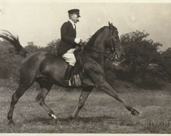 Extended Trot - Vintage 1950s Tokyo Equestrian and Dressage Horse Photograph