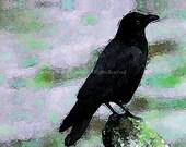 Sale - 10 Crow II Blank Note Cards