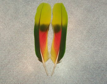 "Matched Pair Amazon Parrot 5"" Tail Feathers AM2"