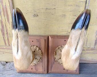 Deer Antler Hoof Rack Coat Display Ornate Motiff Bone Fur Wood Pair Home Decore Cabin Cottage Woodland