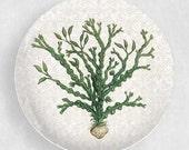 Green Seaweed melamine plate