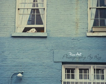 Dog Resting in window, Greenwich Village NY -  Original photograph / print. Blue building in NYC.  vintage look.