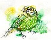 """Green Catbird- Watercolor Bird Painting- Print of Original- 5""""x7"""""""