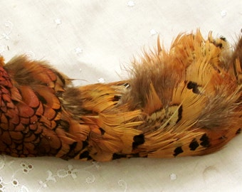 Vintage Clump of Organic Pheasant Feathers Including Phorescent Red Breast Feathers