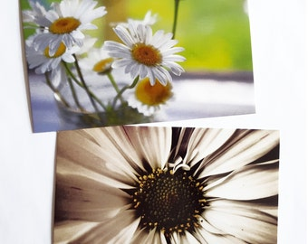 Daisy Postcard Set