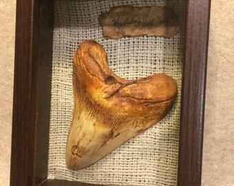 """Megalodon shark tooth replica fossil 5 5/8"""" dinosaur  like bone resin casting"""