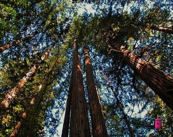 Muir Woods -horizontal (FREE shipping in the U.S. only)--customized card, print or canvas