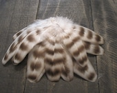 13 Grey & Black Small Rooster Wing Feathers ~ Cruelty Free
