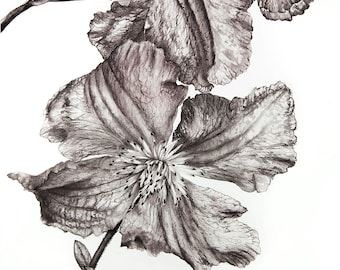 "Clematis ""Blue Angel"", Monochrome aquarelle painting, fine art"