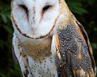 Barn owl feathers   Etsy