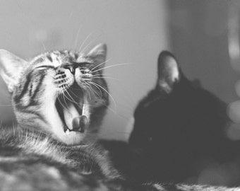 Cats Photograph Art Print Kitties Black and White