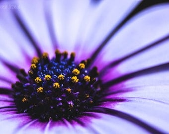 Free Shipping  Purple Flower Photography - Fine Art Photography - Macro Flower Photography