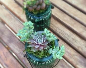 Succulent Jar Terrarium, Hanging Terrarium Kit, Succulent Terrarium, Mason Jar Terrarium, DYI Terrarium, Mason Jar Succulent, Succulent Kit