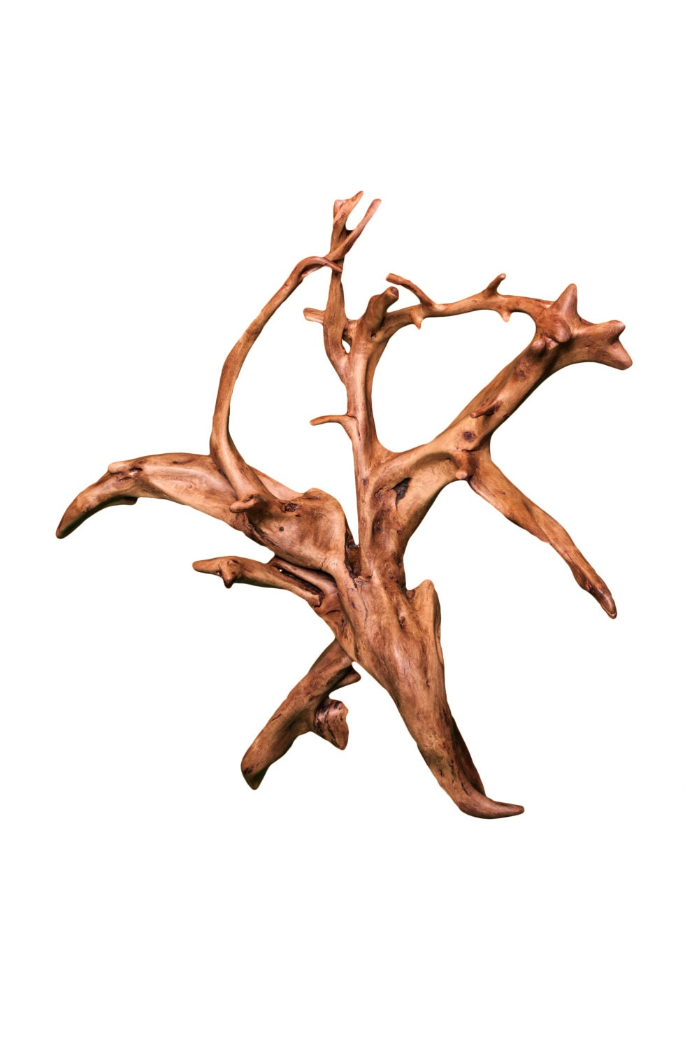 Tree Stump Wall Decor : Wall decor oak tree stump