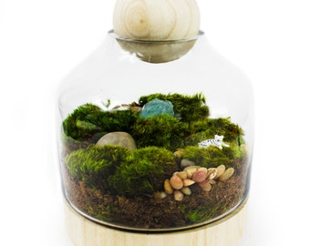 Moss Terrarium // Tiger // Ter-roar-ium