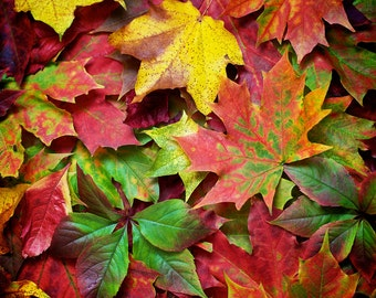 Photography, Autumn, Leaves, Fall,  Red, Orange, Yellow, Wall Art, Home Decor.