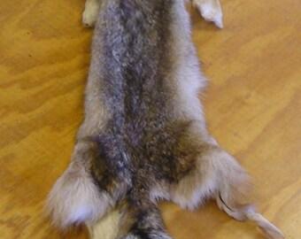 XLarge Coyote Skin