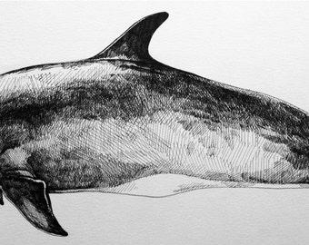 """Letterpress, cetacean collection-""""Risso's Dolphin"""""""
