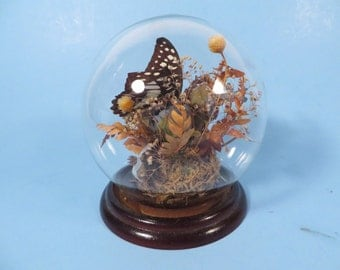 Vintage Mounted Butterfly Round Glass Cloche - Butterfly Cloche