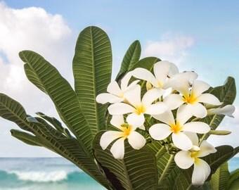frangipani flowers nature photography print.