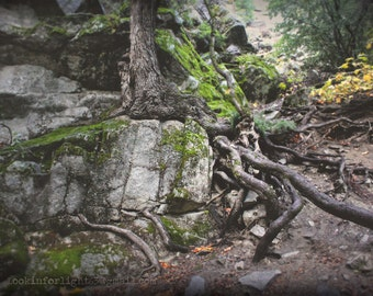 Surreal Tree Roots, Tree Roots Photo, Yosemite photo, California Woodlands Photo, Vernal Falls Trail Tree Photo Art, Yosemite California Art