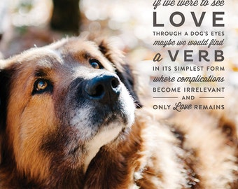 Lessons From the Water bowl - Volume 2 - Prints - See Love