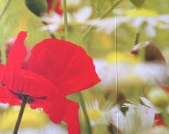 Cotton sateen - Digital Print POPPIES - 100% cotton - 205 cm x 150cm