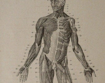 1878 Antique print of HUMAN ANATOMY: MUSCLES. 138 years old medical engraving