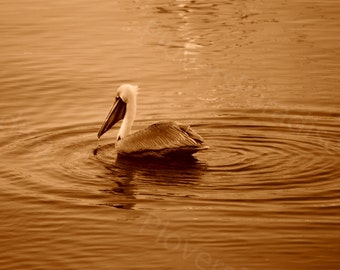 CLEARANCE Prints // PHOTO SALE // 8x10 and 5x7 Sepia Nature Photography