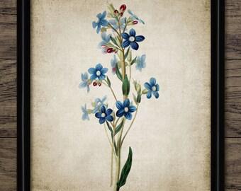 Blue Flowers Print - Flower Illustration - Botanical Flower Art - Digital Art - Printable Art - Single Print #144 - INSTANT DOWNLOAD