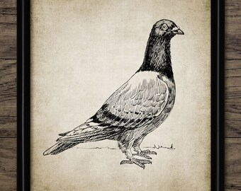 Vintage Racing Pigeon Print - Homing Pigeon Illustration - Pigeon Fancier Gift Idea - Printable Art - Single Print #559 - INSTANT DOWNLOAD