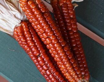 Corn 'Ottofile Rosso' Seeds