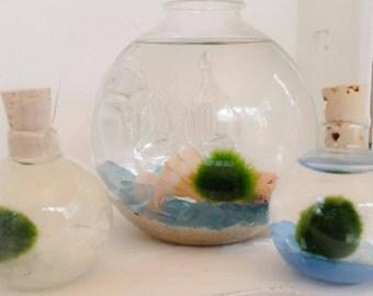 Marimo Moss Ball pet Aquarium Kit