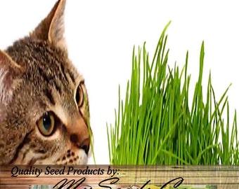 1,000 x Catgrass Cat Grass Seeds - Agropyron cristatum - Excellent thin grass for Flower Planter Box - Your Cats & Kittens will love it