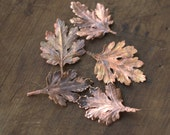 Leaves of chrysanthemum, electroformed with copper natural leaves, real leaf, electroformed leaves, copper plated,
