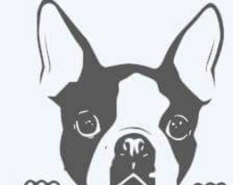 Peeking Boston terrier vinyl window decal available in any basic color. There's no background.