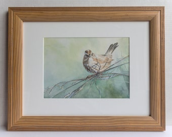 Song Sparrow Framed Original Watercolor Painting