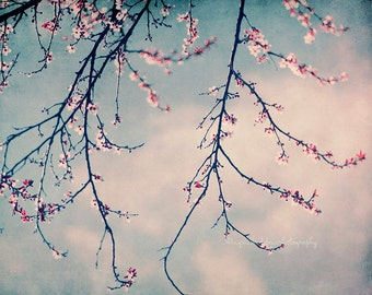 flower photography, white floral print, white flowers, whimsical, cherry blossoms, nature photograph, blue sky, fine art print, home decor
