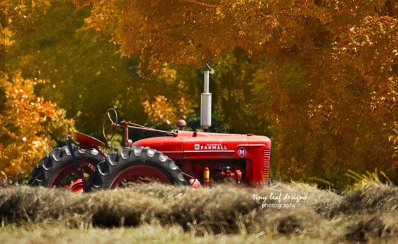 Farmall M in the Fall - Original Photography 5x7 8x10 11x14