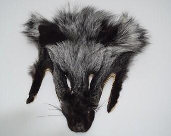 Silver Fox Face