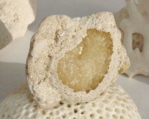 Golden Honey Calcite Fossil Sea Shell Calcified Seashell Geode Druzy Sandy White Coquina Limestone